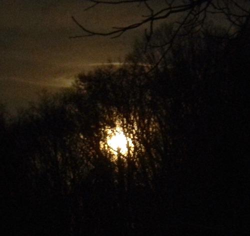 moonTree1